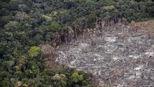 Cómo la pérdida de biodiversidad está aumentando el contagio de virus de animales a humanos