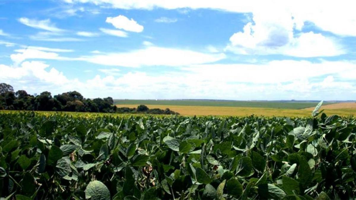 El cultivo de soja en la Argentina es esencial para la economía y requiere el uso del glifosato. Según datos, en el país se usa 10 litros del herbicida por habitante, el promedio más alto del mundo.