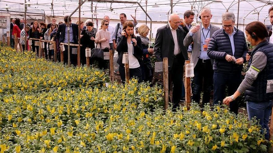 Las flores colombianas, el color en el acuerdo comercial entre Colombia y la Unión Europea