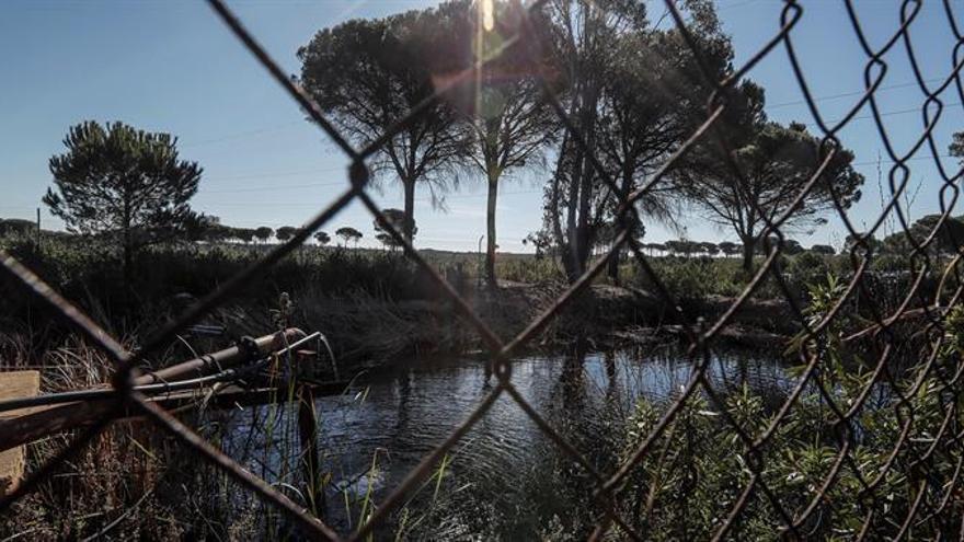 La Confederación del Guadalquivir cerrará 77 pozos ilegales en la zona de Doñana