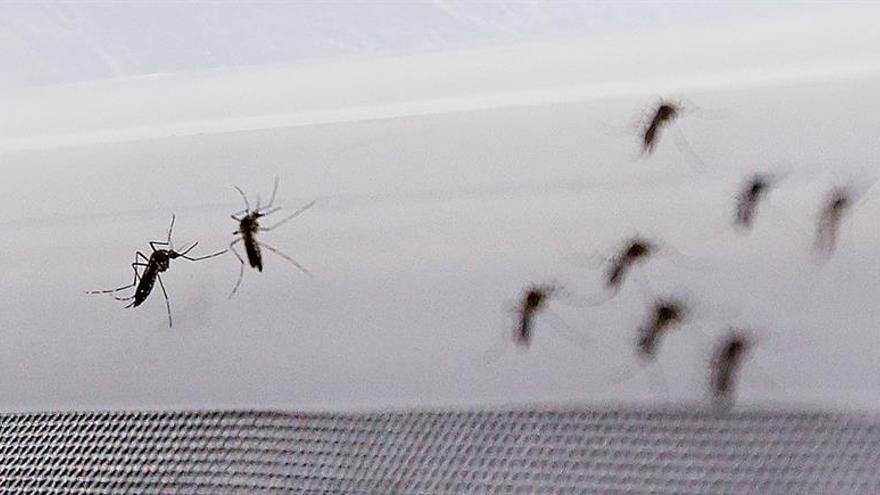 Científico dice que el zika tiene complicaciones que lo hacen peligroso