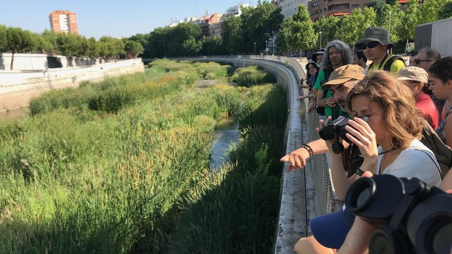 Madrileños observan aves en el río Manzanares, después de su naturalización.