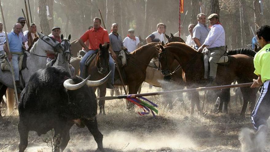 PACMA ve un éxito la prohibición de la muerte del Toro de la Vega y pide suprimir el torneo