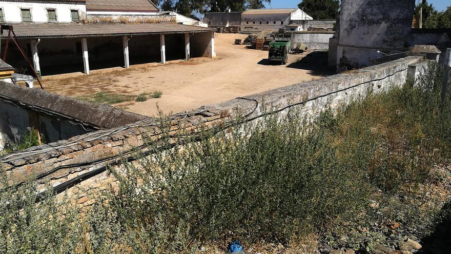 Estado de abandono de las tierras de Queipo (exclusiva de eldiario.es Andalucía).   JUAN MIGUEL BAQUERO