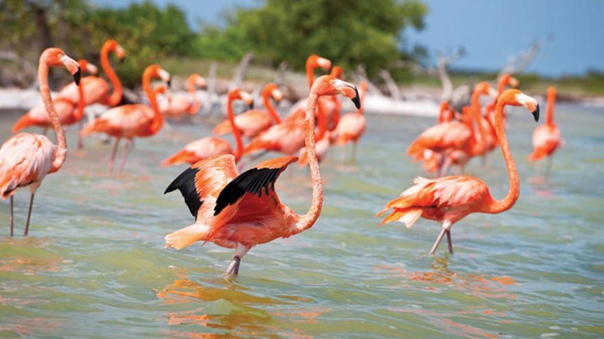 La península del Yucatán alberga una variada fauna.