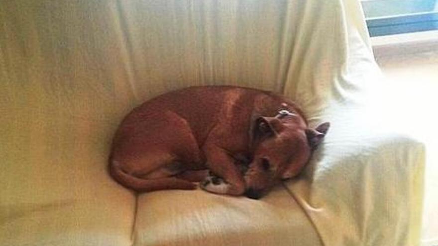Excálibur, el perro que mató la Comunidad de Madrid por haber estado en contacto con la sanitaria infectada por ébola.