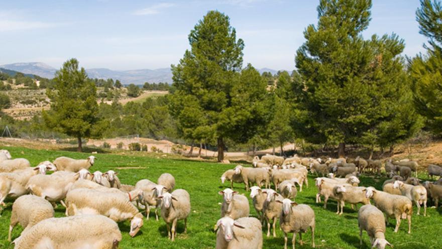 Cantero de Letur, pioneros en producción ecológica de lácteos que comienzan a exportar a Europa