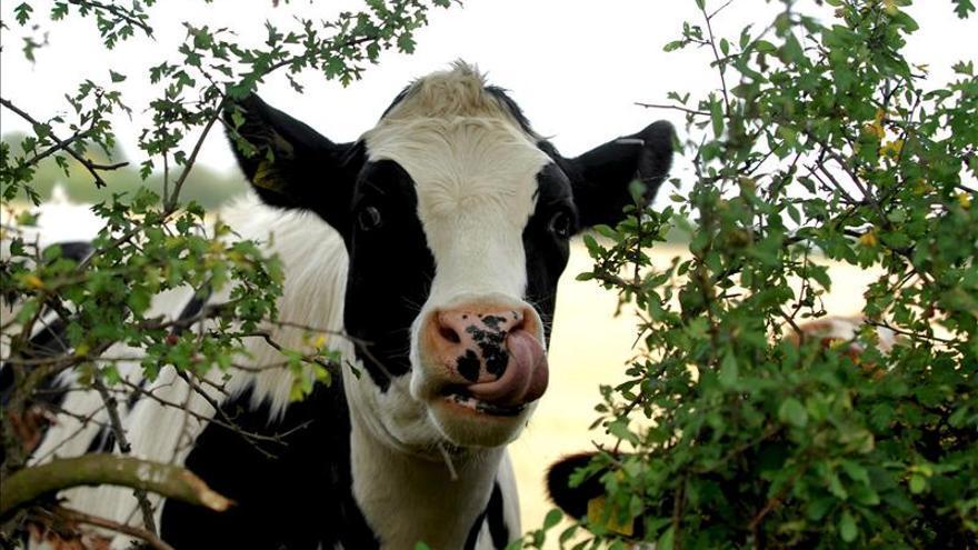 Ecuador aspira a exportar carne en corto plazo y a ser declarado sin aftosa