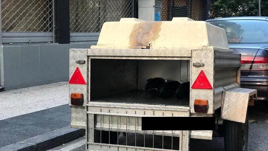 Investigan a un hombre en Vitoria por transportar mil kilos de pescado en un transporte para perros y sin refrigerar