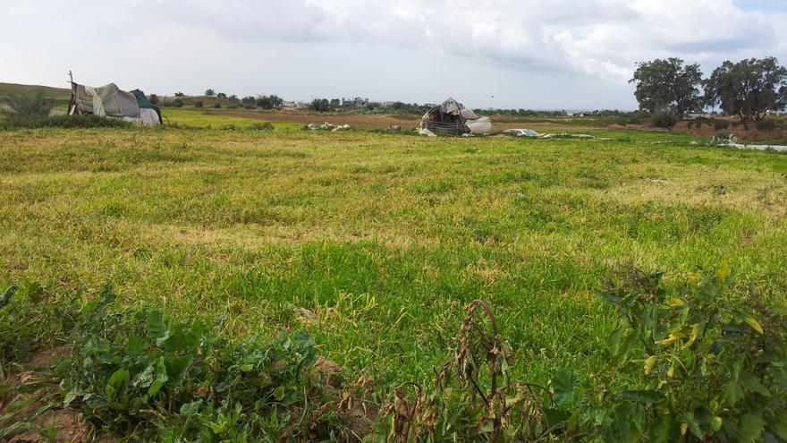 Campos en Gaza destruidos por herbicidas israelíes / Foto: Isabel Pérez