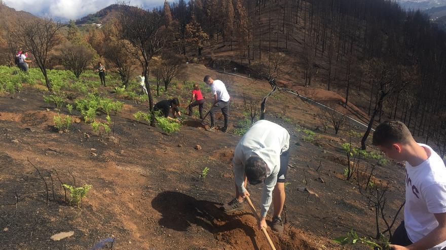 Alumnos y alumnas participan en la reforestación de la cumbre