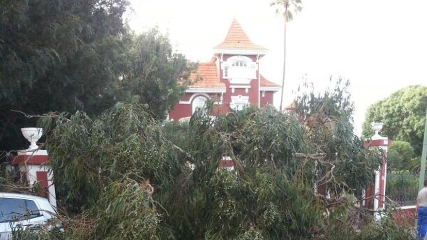 Una de las ramas de estos árboles cayó recientemente sobre la calzada.