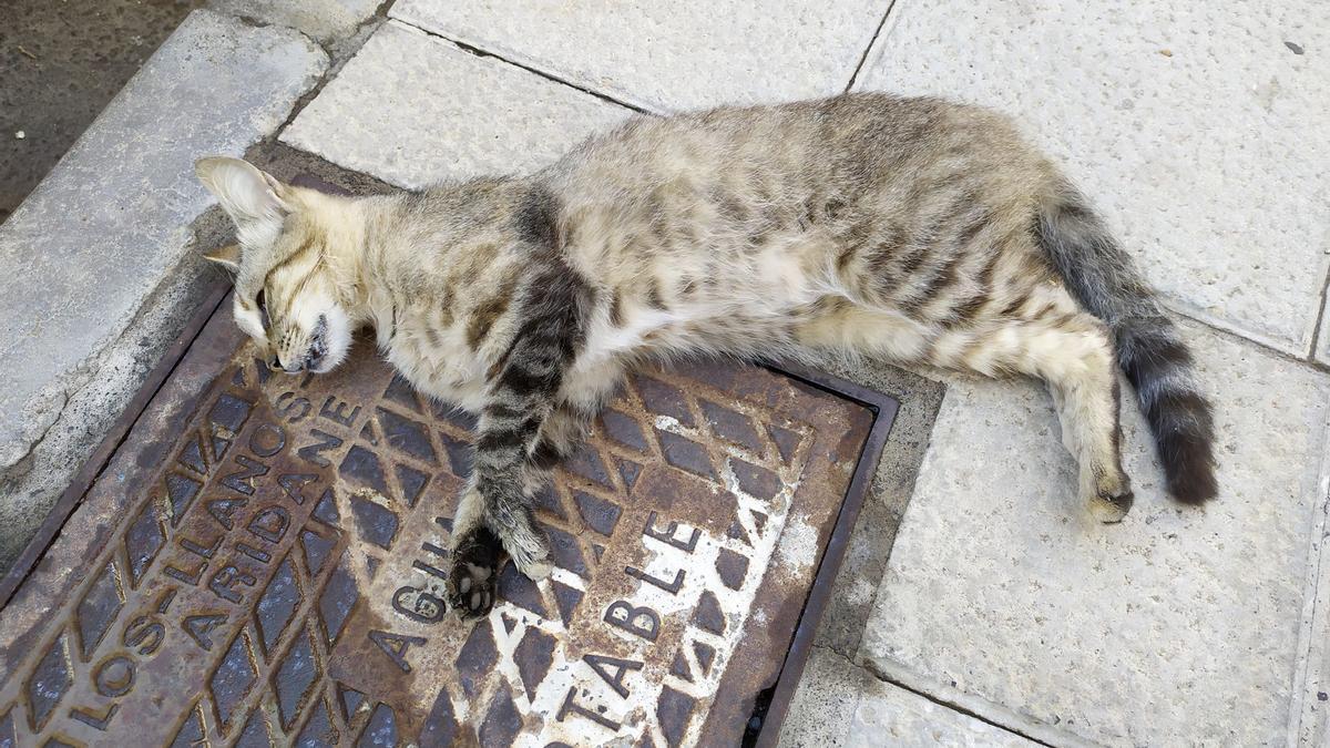 En la imagen, uno de los gatos.