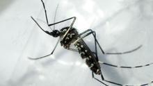 Aumenta a 151 la cifra de muertos por dengue grave en Honduras