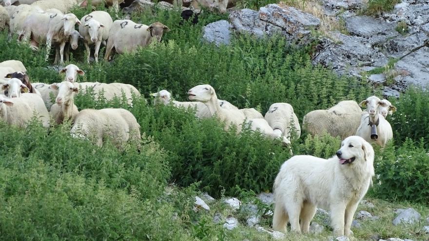 Convivencia y respeto: recetas para compatibilizar la ganadería y el turismo en el medio rural