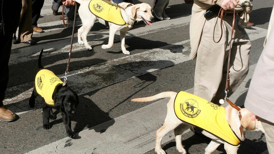 Perros guía de invidentes. EFE/ Victor Lerena/Archivo