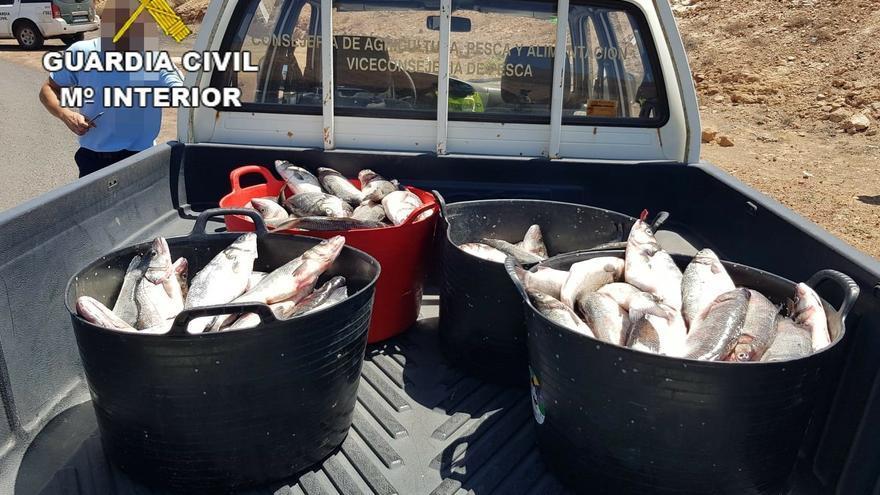 150 kilos de lubina robada de una piscifactoría de Lanzarote.