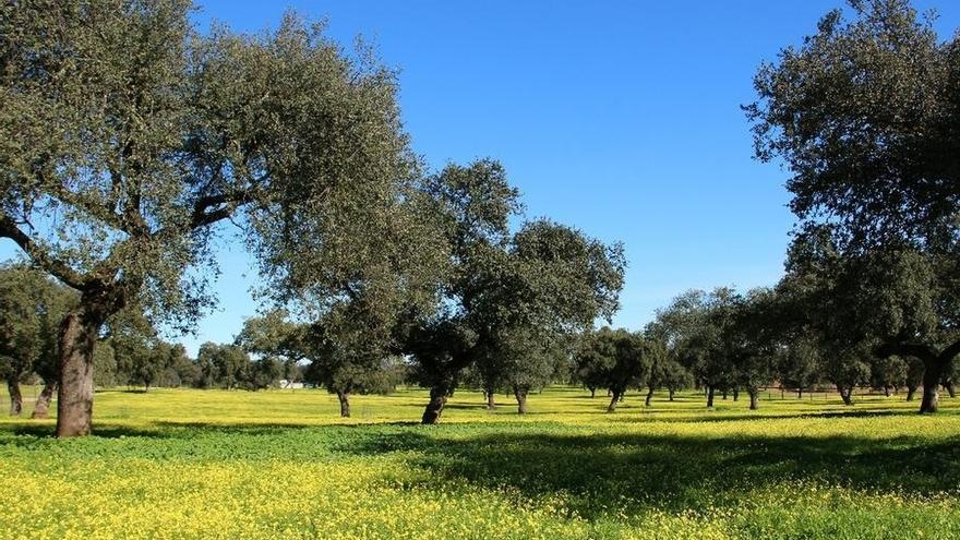 Agricultura amplía hasta el 14 de octubre el plazo de presentación de comunicaciones al Censo de Dehesas