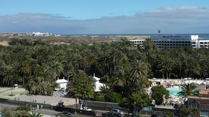 El palmeral del oasis que se verá seriamente afectado por el nuevo hotel de RIU.