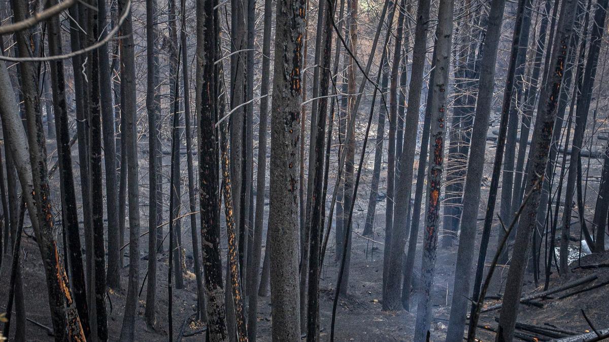 El incendio en El Hoyo, Chubut, de esta semana destruyó bosques y viviendas y mató a una persona.