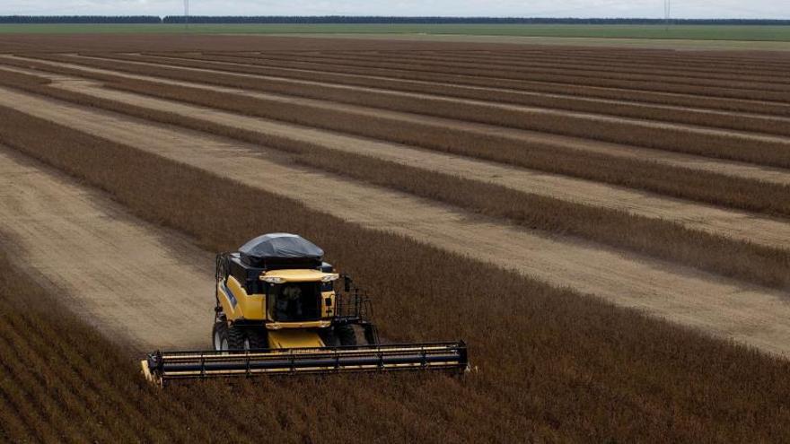 Brasil recogerá una cosecha récord de granos este año