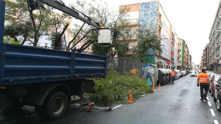 Árbol caído en La Laguna, en la calle Heraclio Sánchez y por efecto del temporal desencadenado este jueves en las islas