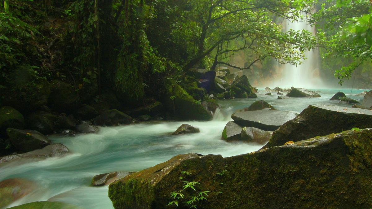 El Río Celeste atraviesa el bosque lluvioso en el Parque Nacional Tenorio.