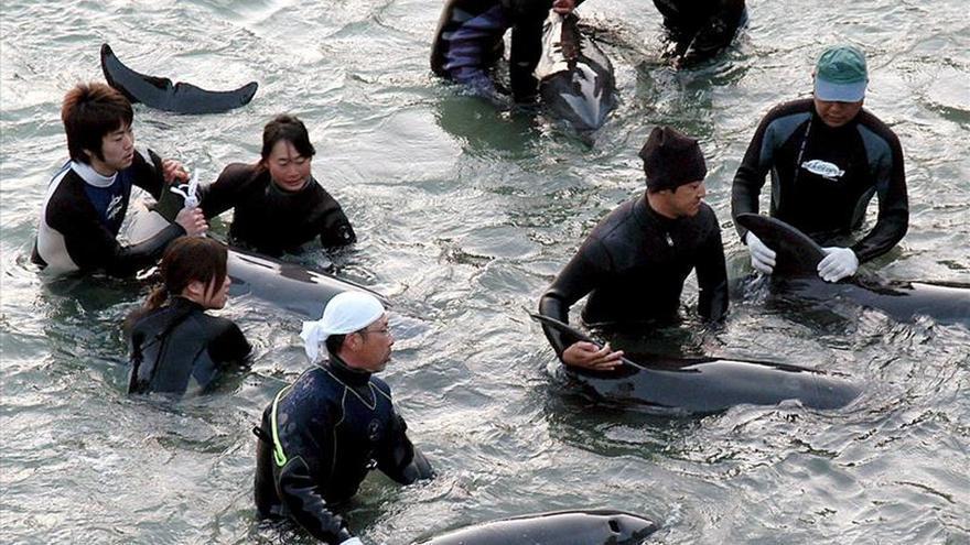 El ministro de Pesca de Japón defiende el método nipón de captura de delfines