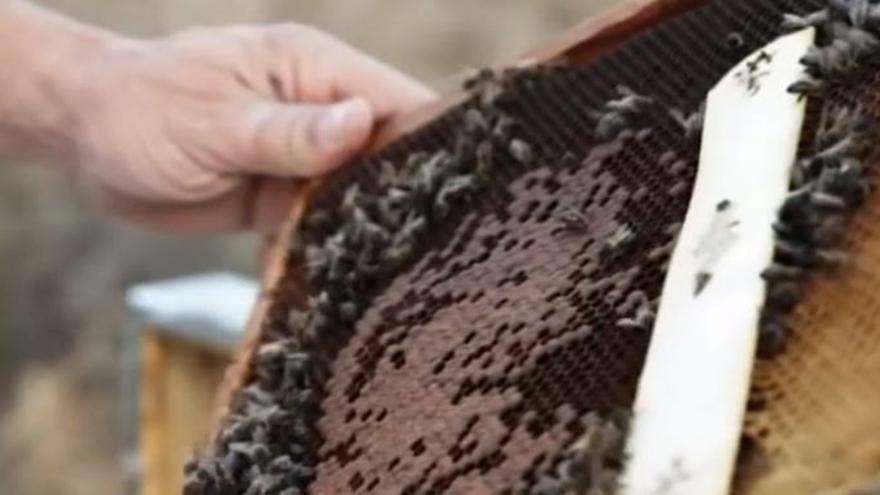 Trashumancia de abejas: un premio contra la despoblación y por el medio rural