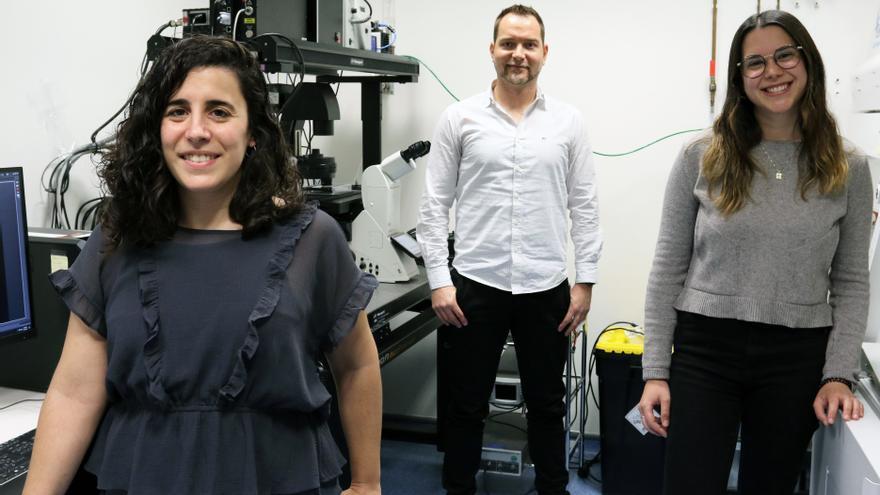 Crean 'biorrobots' con células musculares capaces de nadar y autoentrenarse