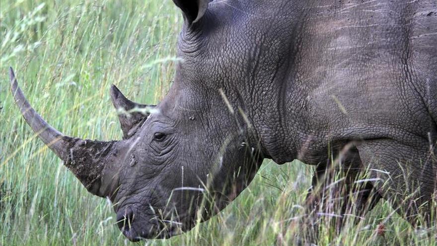 Sudáfrica expulsa a un diplomático norcoreano por traficar cuerno de rinoceronte