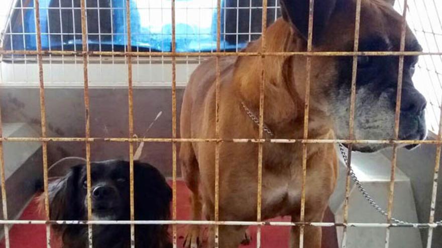 Centro de acogida de animales 'Huella a huella'