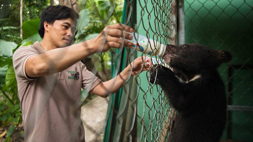 Free the Bears, proyecto de conservación de osos en Sudeste Asiático