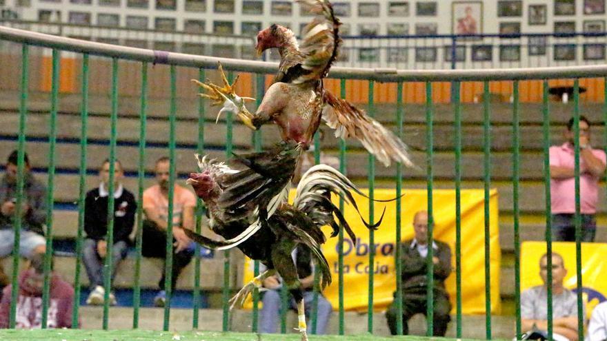 Pelea de Gallos en la gallera del López Socas