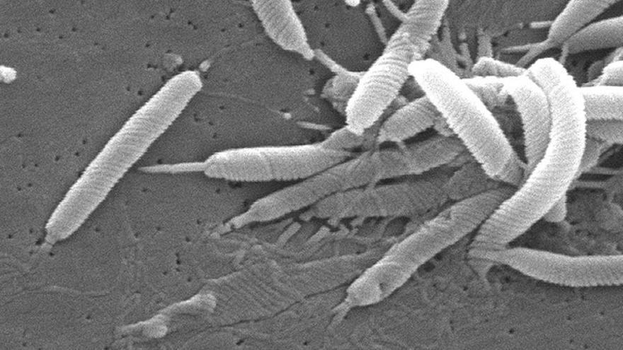 Helicobacter pylori; un riesgo latente que vive en nuestras entrañas