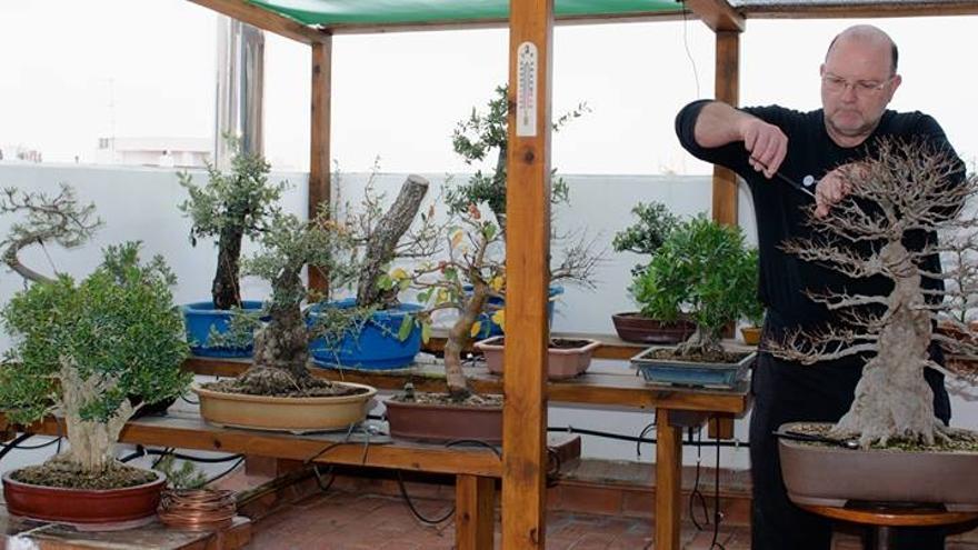 Barto Esbrí desconecta de la profesión de bombero con su gran pasión: el cuidado de bonsáis