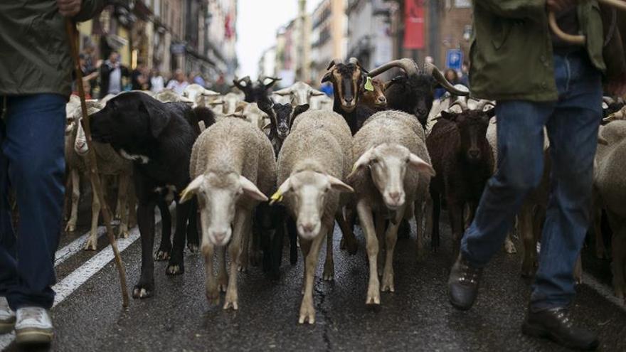 Carmena recibe a los pastores con rebaños de cabras en Día de la Trashumancia