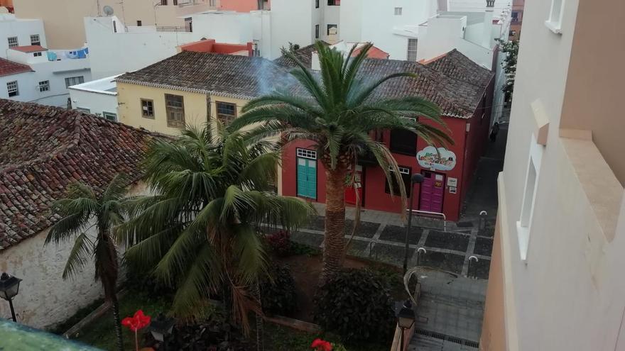 Conato en la copa de una palmera en la calle Jorós de la capital