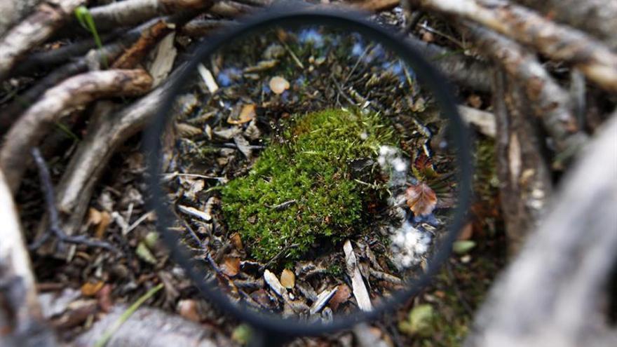Un nuevo hongo obliga a replantear la naturaleza del liquen