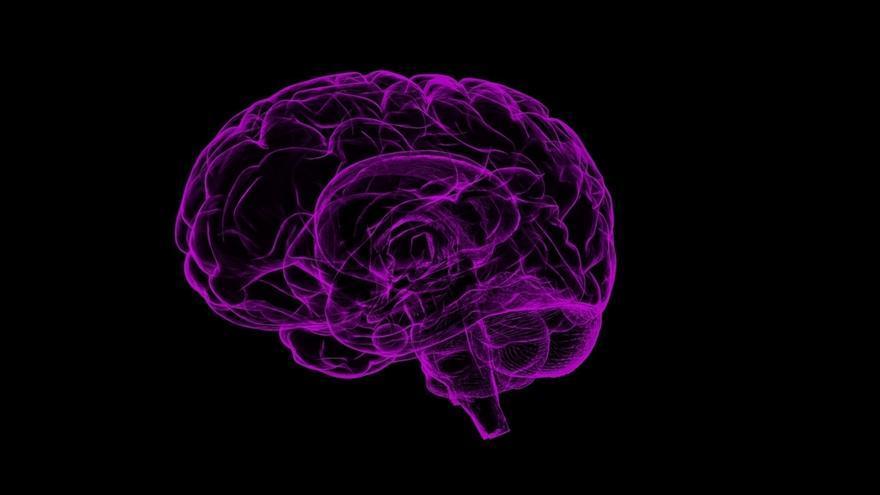 Valdecilla e Idival crean un banco de cerebros para almacenar muestras biológicas para proyectos de investigación