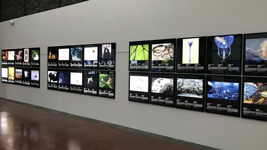 Imágenes que se podrán observar en la instalación de La Laguna