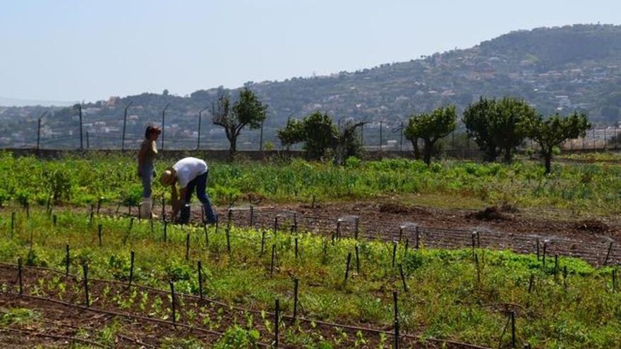 Objetivo: retroalimentar el entorno para un sistema agroalimentario más biodiverso