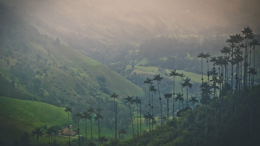 Las Palmas de cera son una de las señas de identidad del Valle de Cocora. Sergej