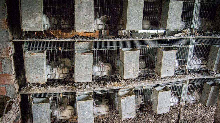 Una granja de conejos en Muxia, A Coruña.jpg