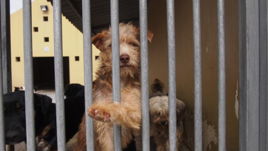 Perros en las jaulas del albergue insular de Gran Canaria.