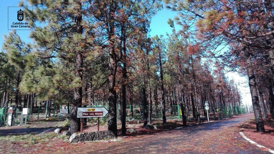 Carretera de acceso al Pico de Las Nieves.