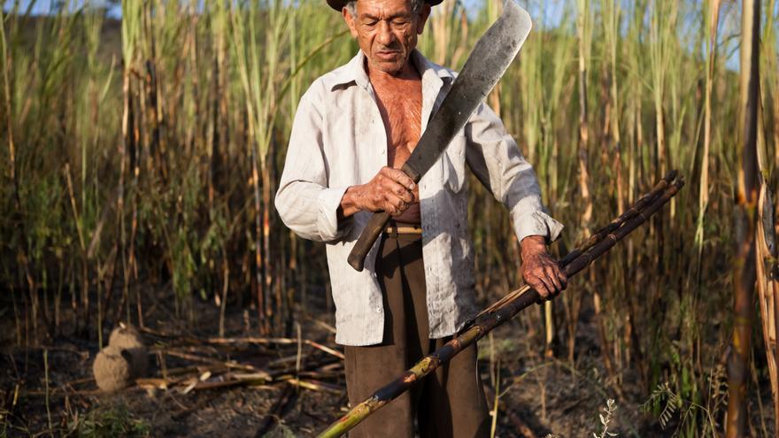Trabajador de la caña de azúcar en Brasil. / Tatiana Cardeal/Oxfam Intermón