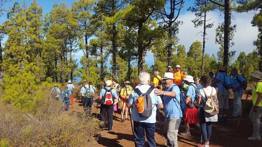 En el 'I Encuentro Clubes Senderismo La Palma'  se realizaron tres rutas de distintas dificultades.