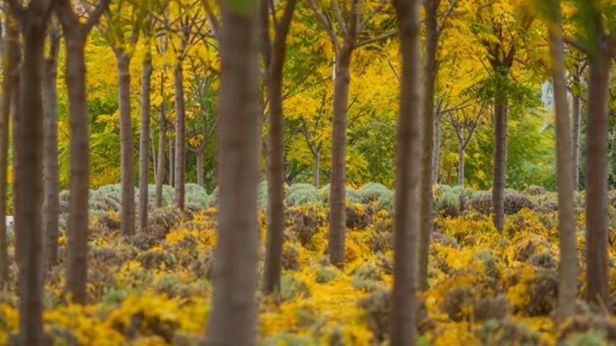 Ocho trastornos de salud que hay que vigilar en otoño