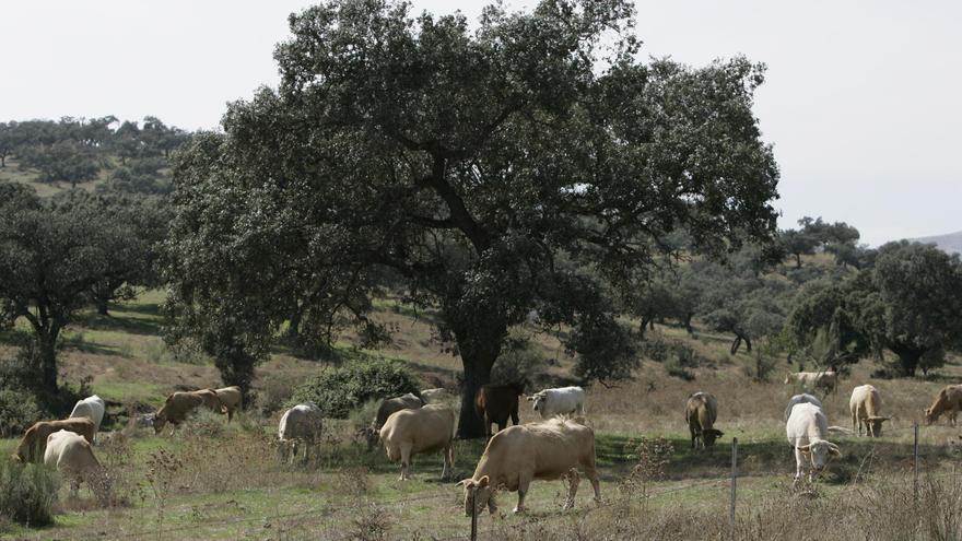 CNC alerta a Agricultura de que la Ley de Fomento de Razas Ganaderas mantiene barreras a nuevas asociaciones